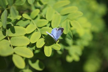 Blue butterfly focused on leafs