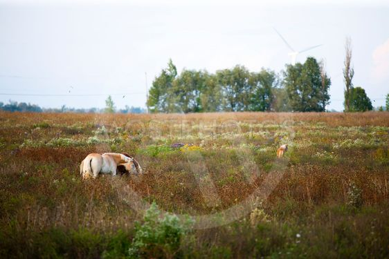 horse grazing at field