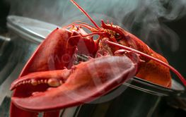 Hot smoking Boiled Lobster, close up