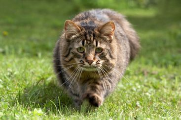 The cat goes on a grass
