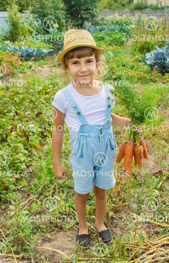 A child with a bunch of carrots in the garden. Selective...