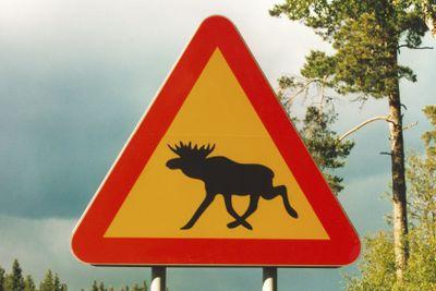 achtung elch | attention elk