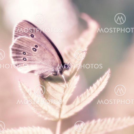 Sommerfugl i min drøm