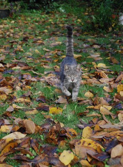 Cat in autumn 3