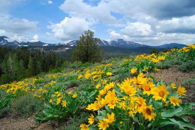 Springtime In the Sierra's