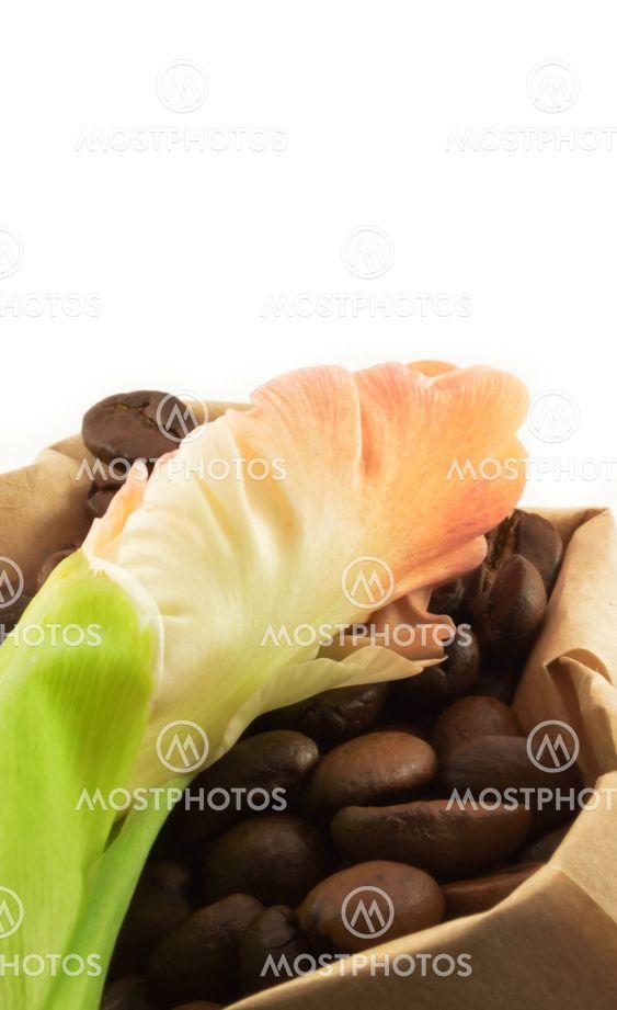 Kaffe korn