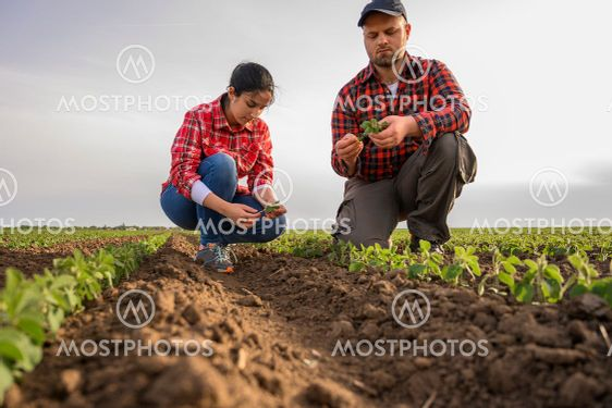 Young farmers examing planted soy