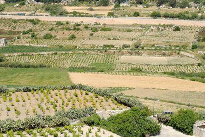 Maltese Fields