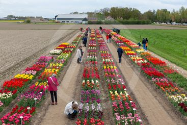 Garden with exposition of several kind of tulips, the...