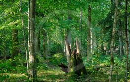 Summertime natural deciduous forest