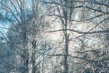 Winter landscape with frosty trees and bushes