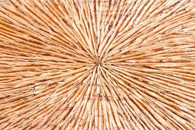 Orange color wood carved