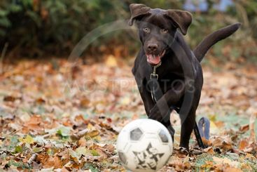 A young dog is playing