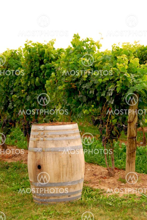 Wine barrel at vineyard