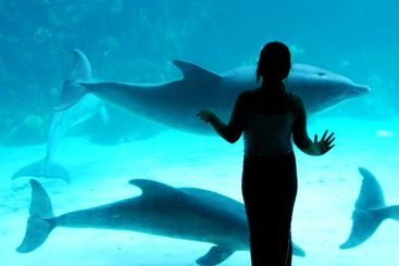 Girl and the dolphins