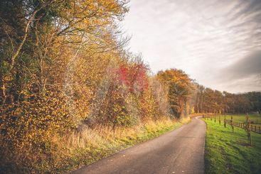 Countryside landscape in the fall