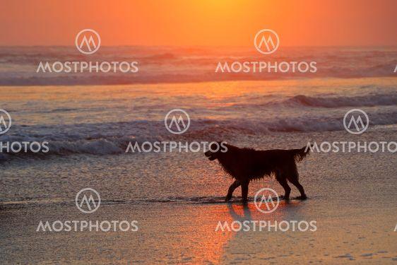 Dog on scenic beach at sunset