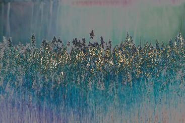 Gyllene vass i abstrakt fotokonst - Silvertid