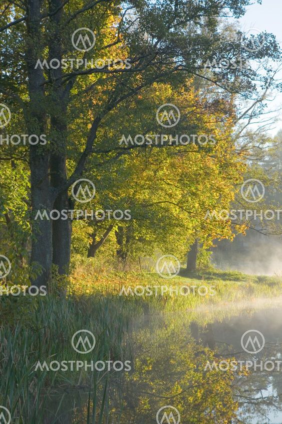 Autumnal trees over calm foggy water