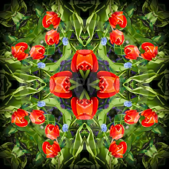 Square, kaleidoscope, a pattern from a photo of flowers...