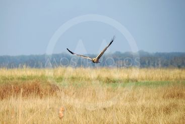 Birds of the steppes