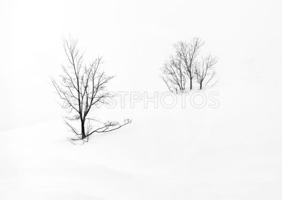 single tree isolated