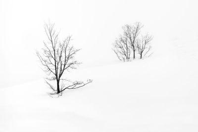 single tree isolated