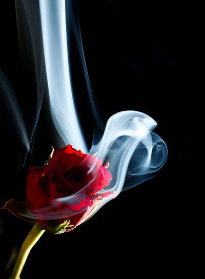 Smoke a rose?