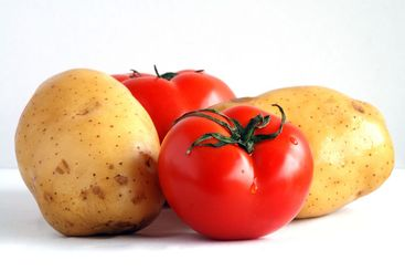Two potatoes and two tomatoes (1)