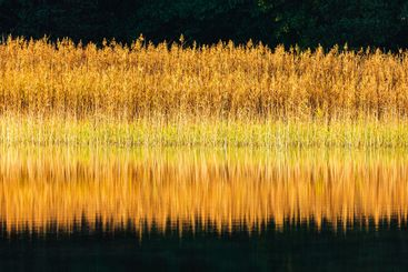 Lake with reeds on autumn day