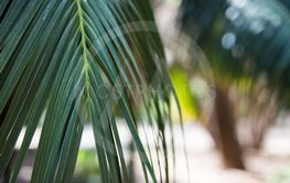 close up of palm tree - summer background