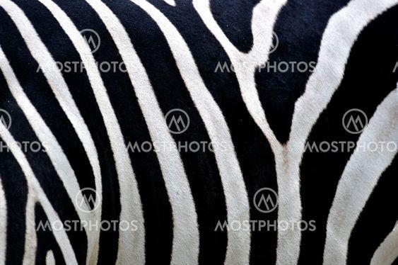 Zebra mønster