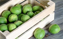 Young green fruits of walnuts in a green shell in a...