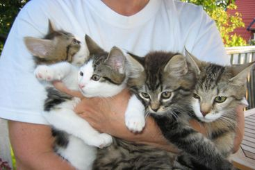 Cluster of Cats
