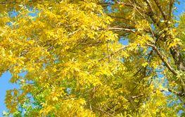 Autumn at the park 2