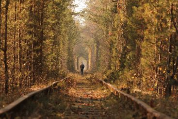 A lonely man walking through the tunnel of love. Autumn.