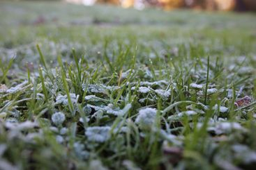 Morning frost on meadow