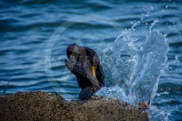 fågel och vatten
