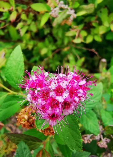 Heart shape pink flowers