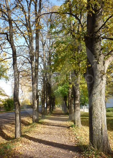 trees, alley, autumn, track