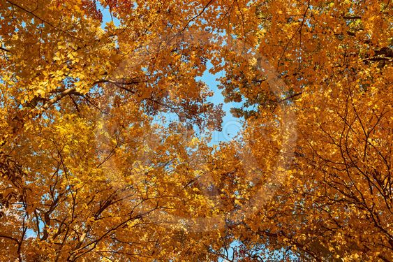 Autumn colors,  leaves and trees