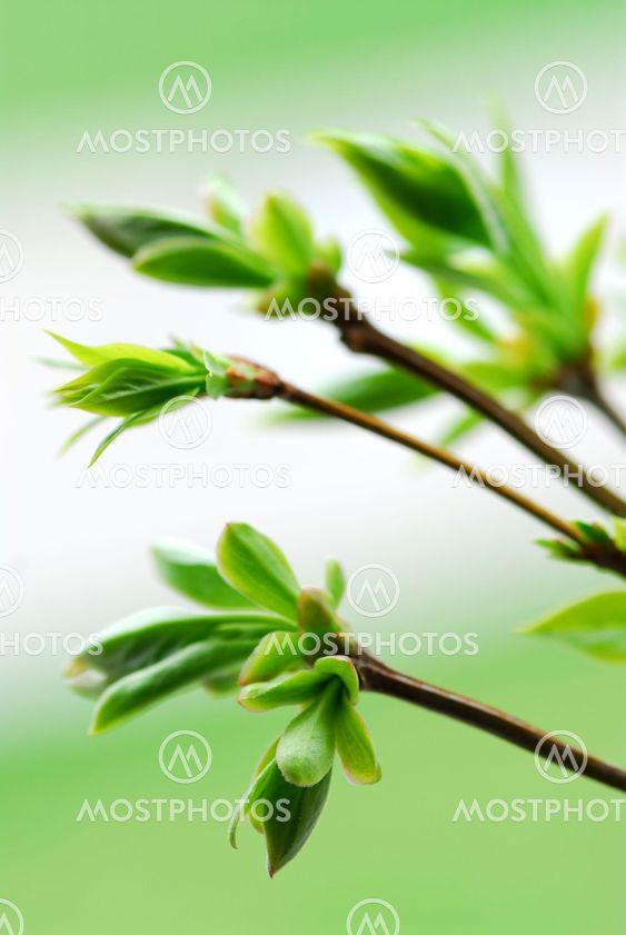 Vår gröna blad