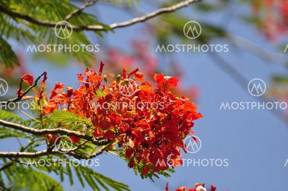 Hue Flowers