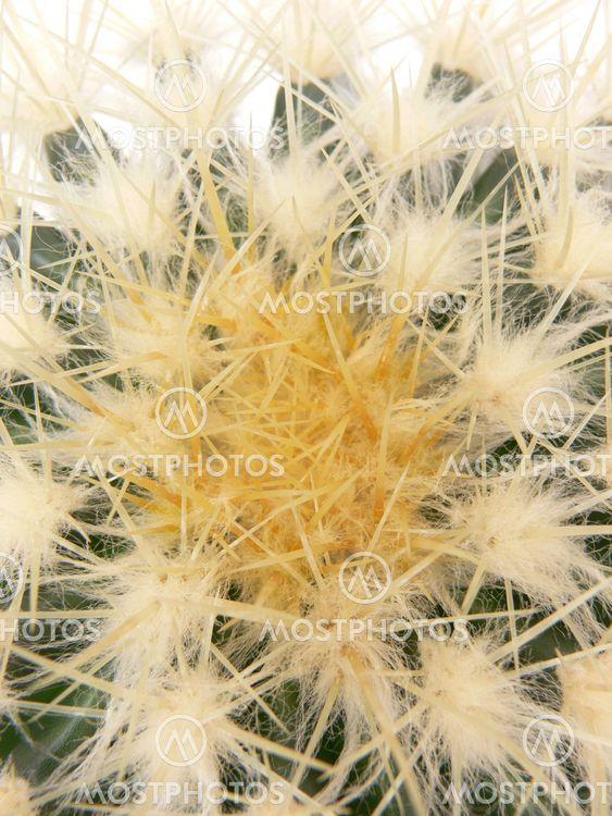 Kaktuskasvit