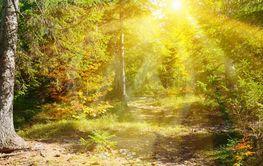Sun rays illuminate autumn forest