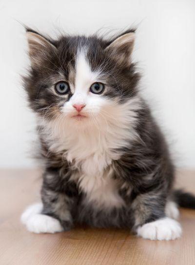 Cat Kid 3