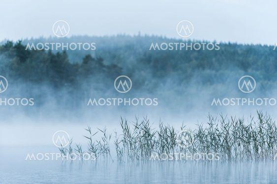 Misty lake with reeds, Sweden