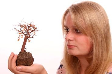 Young female looking at a dead bonsai tree