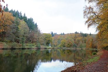Rainy day at lake in forest in autumn