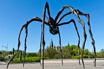 Canada Spider
